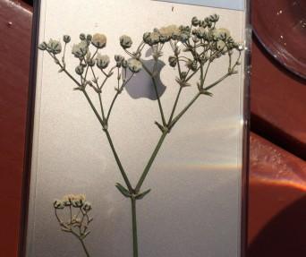Iphone case 1-2